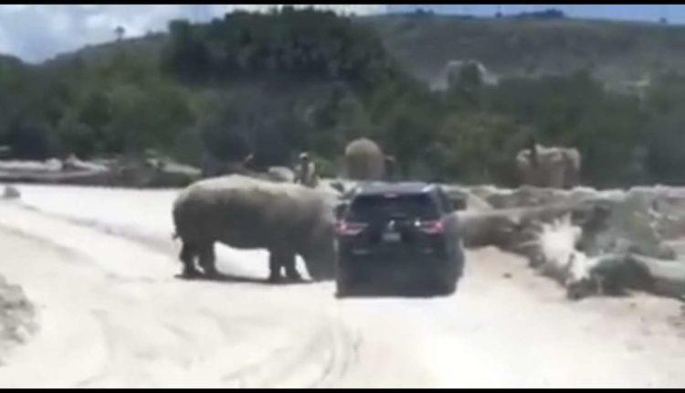africam safari rinoceronte camioneta