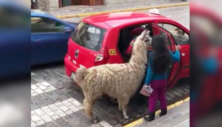 llama taxi perú