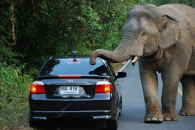 elefante mata a conductor