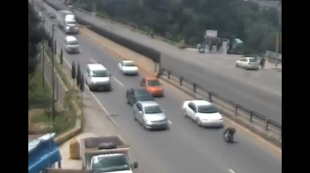 hombre salva a perro carretera